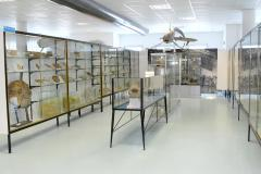 San Benedetto del Tronto - Museo del Mare